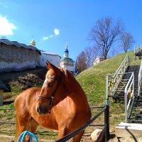 Грациозная лошадка :: Наталья Левина