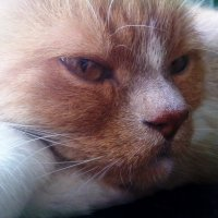Cat. :: Louise McKay
