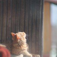 Соседский кот :: NюRа;-) Ковылина