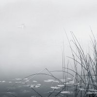 Туман... :: Александр Никитинский