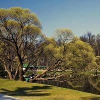 Весна..... :: Viacheslav Birukov