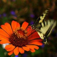 бабочка :: Анна Маркина