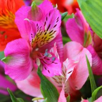 Цветы :: K. PHOTOGRAPHY