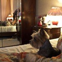 фотограф дама и собачка :: Александр