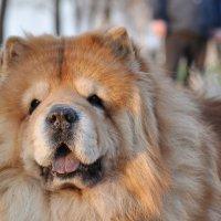 Когда б могли собаки говорить, как много бы они нам рассказали! :: Ирина Данилова