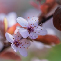 Цветок.3. :: Валера Шаповалов