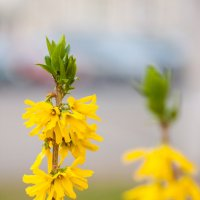 цветочки :: Диана Матисоне