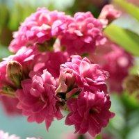Весна) :: Елена Lee