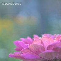 Начало цветения :: Maria Afanasieva