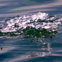 Ледяная лягушка :: Олег Сафонов