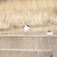 Две чайки :: Екатерина