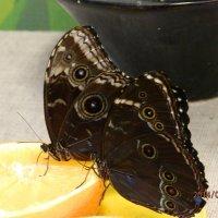 Бабочки :: Татьяна Шестакович