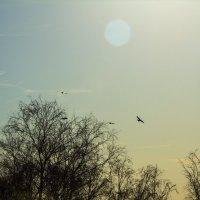Прилетели птицы :: Роман Вольский