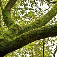 Старое дерево :: Алексей Дмитриев