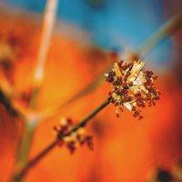 Весна идет! Весне дорогу! :: Nina Zhafirova