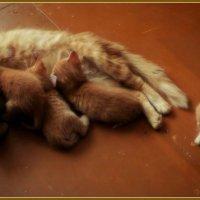 У нашей солнечной кошки родились маленькие солнышки! :: Ольга Кривых