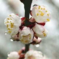 Есть в дожде откровенье - потаенная нежность... :: Наталья Костенко