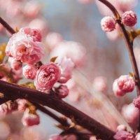 Квіточки :: Ira Oleynik