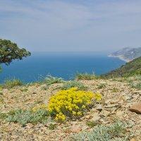 Цветы на скале :: Ирина Рассветная