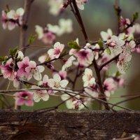 Цветочки :: Анастасия Демида