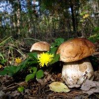 Привет из леса :: Татьяна Пальчикова