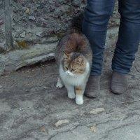 Кошка :: Виктория Мацук