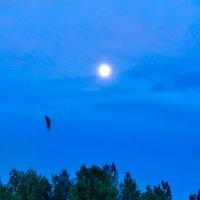 Ночной пейзаж :: Анатолий Клепешнёв