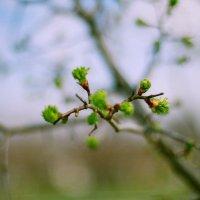 весна :: андрей иванов