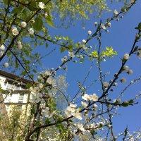 Весна :: Анастасия Ануфриева