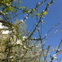 Весна 2 :: Анастасия Ануфриева