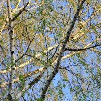 Весенний воздух :: NICKIII Михаил Г.