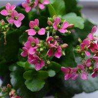 Цветы в горшке :: Денис Мартьянов