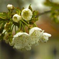 цветы :: fotomaf photorpher