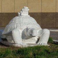 Черепаха и лягушка :: Сергей Черепанов