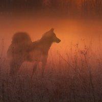 в тумане :: Виталий Исаев