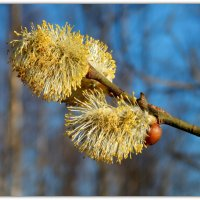 Весна :: Павел Галактионов