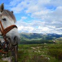 Верный конык д'Артаньяна :: Sergey Lexin