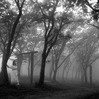 Путь через туман :: Алена Маринц