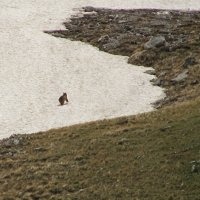 Удирающий медвежонок :: Николай Глазьев