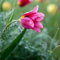 калмыкия весной :: iGOR