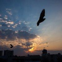 летите, голуби :: Татьяна Исаева-Каштанова