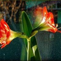 Пришла весна! :: Владимир Шошин