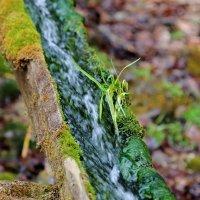 Лесной водопровод :: Нина Сигаева