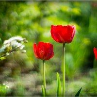 tulip2 :: yameug _