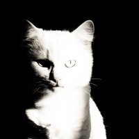 свет и тень :: Олеся Семенова
