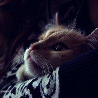 Полное спокойствие ! :: Владимир Самышев