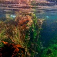 Бухта морской капусты. Ниже уровня моря :) :: Boris Khershberg