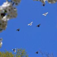 Голуби летят :: Виктория Гавриленко