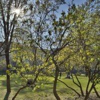 Весенний парк. :: Андрей Чиченин