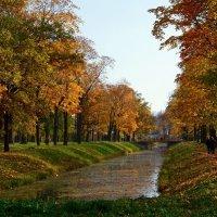 Осенью в парке :: Наталия Короткова